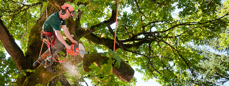 Ridge Roots Tree Service in West Lorne, ON - City Business Listing